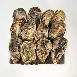 広島産生牡蠣 殻付き20個