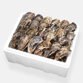 広島産生牡蠣 殻付き70個